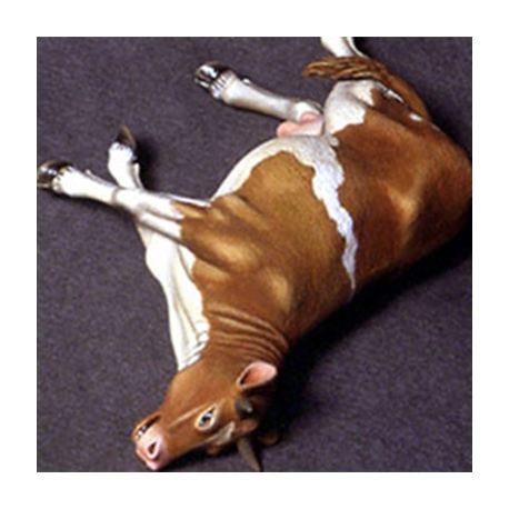 dead-cow.jpg